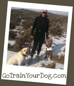 Dog Training Health and Fitness Programs